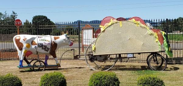 taco bike cow